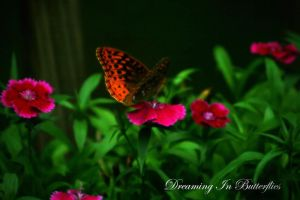 Dreaming In Butterflies by Silver-Dew-Drop