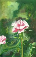 Pink Carnation by aakritiarts