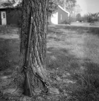 Blackpowder - Kodak Tmax 100 by PLutonius