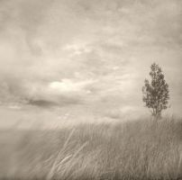 Dunes Sway by intao