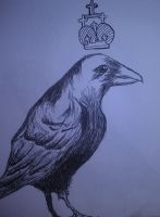 Blackbirds and crows and magpies oh my! by cmckoy