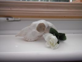 dead sheep +rose by 9madgirl9