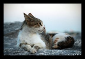 coast cat by ozycan
