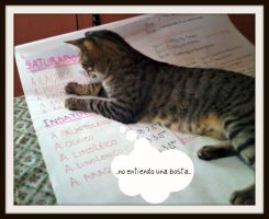 Chemistry and cats does not work by Vanhya