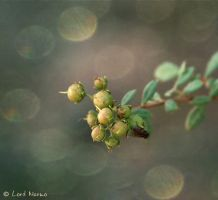 Unborn-Bokeh by TonsofPhotos