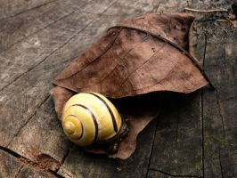 snail... by Arrakis7