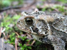 Toad Face by poiuytre00750