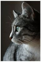 Through the eyes of a cat by Janina-Photography