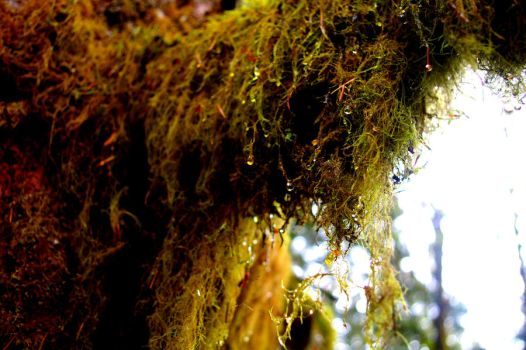 Drops on Moss by Hyacinth-Child