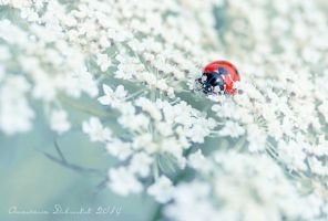 love bug by tasiy