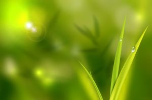 Grass and Waterdrops by hekee