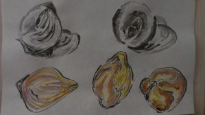 Onion Studies 1 by Abby-LD
