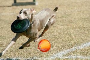 Frisbee Victory Lap by Kippenwolf