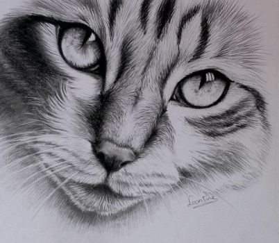 Cat finished by Tinesdierportretten