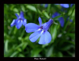 little blue 44 by Halla51