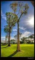 Tall Trees by jdeepan
