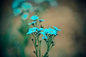 2012-05-28_002 by rootscratch