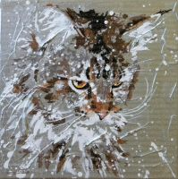 Gayatrie, superbe Main Coon by JessicaSansiquet