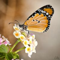 Nature is a Butterfly by Eibo-Jeddah