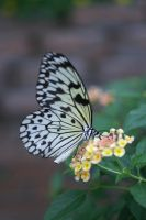 Butterfly House I by LadyRStock