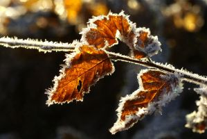 Forest autumn leaves 2 - AStoKo STOCK by AStoKo