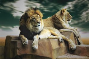 The King and his Queen by comy1982
