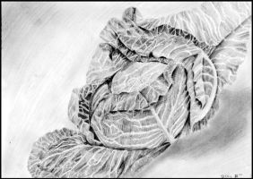 Cabbage study by Devil-Wolf-1999