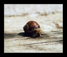 snail02 by greenday862