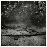 Beneath the Surface 02 by HorstSchmier