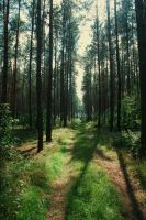 Forest Road 05 by elanordh-stock