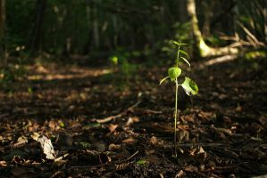 Baby tree by perost