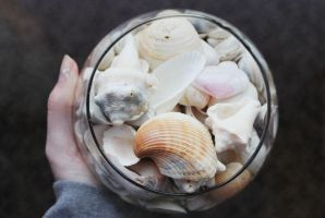 Pot of Shells by GabiAngelo