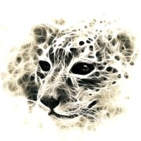 Snow leopard by megaossa