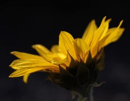 Brilliant as the Sun by andras120