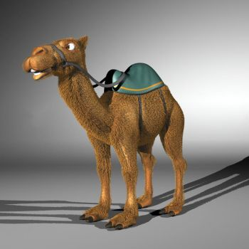 camel by Enginems