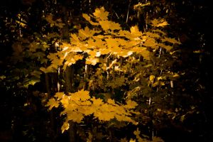 fall by PaalM