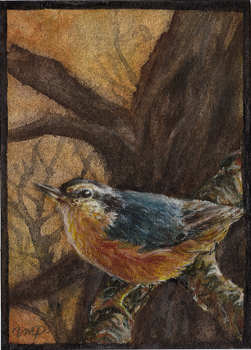aceo nuthatch by kailavmp