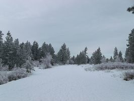 my walk in winter-land today 2 by crimsonravenwarrior
