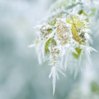frosty by MorkOrk