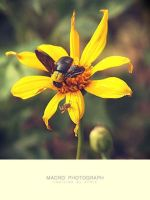 . bee oh bee . by valbury
