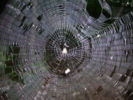 170 - web by WolfC-Stock