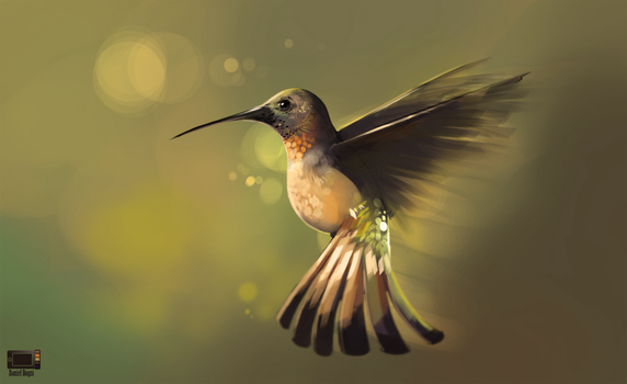 Video - Hummingbird by danielbogni