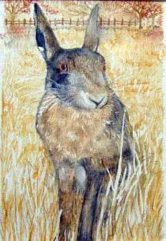 Brown Hare by Mogadored