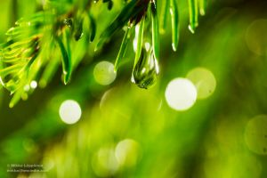 Macro - water droplets on tree by hmcindie