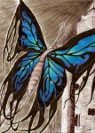 Yonder Butterfly by DragonicDarkness
