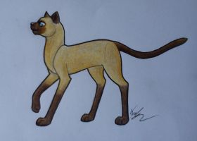 Just a Siamese Cat.. by KarneTia