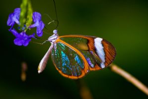 Like stained glass by forgottenson1