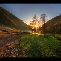 dovedale trees by tweeny