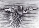 Heron by philippeL
