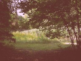 in the meadow by royalheartinhand